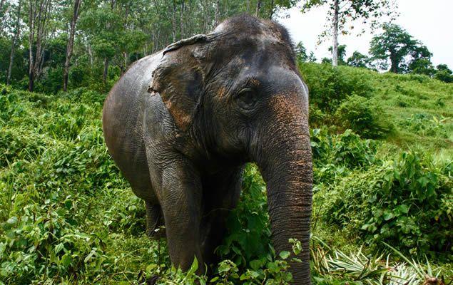 elephant sanctuary park