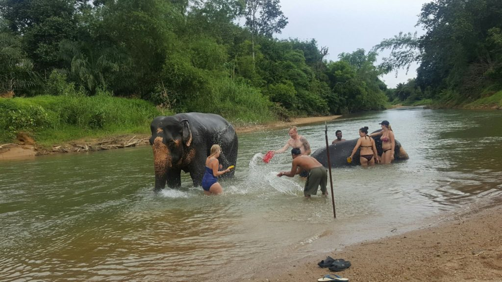 khaosok elephant bathing