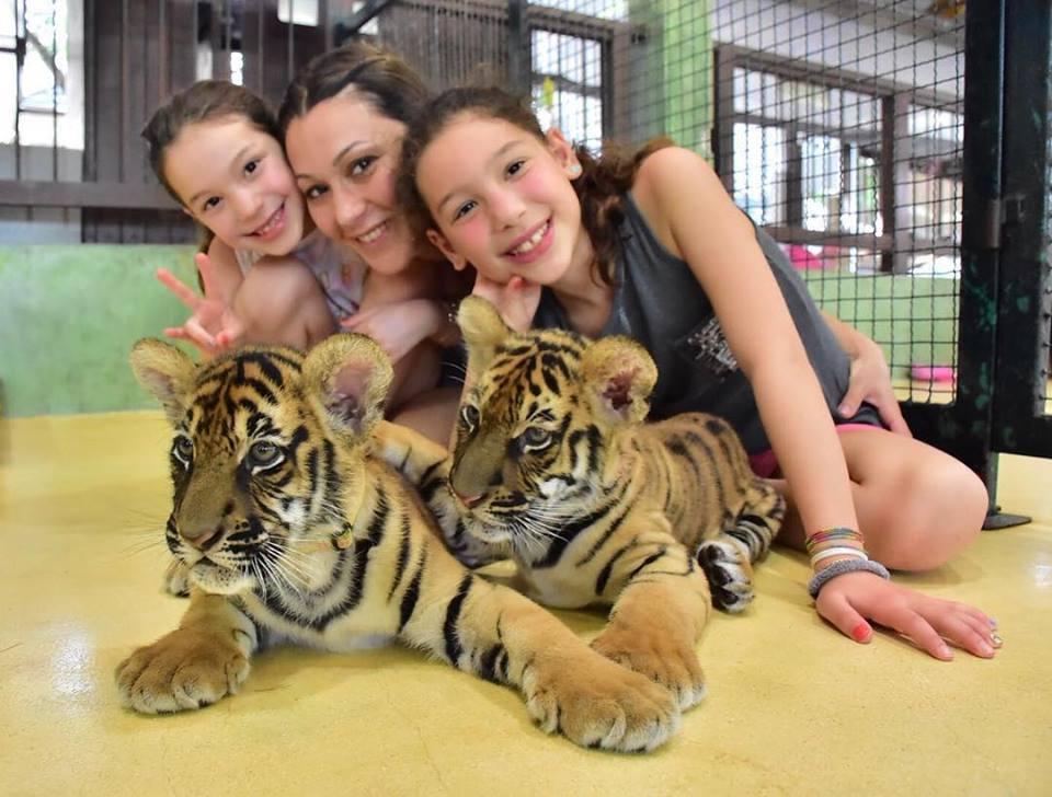 phuket tiger park